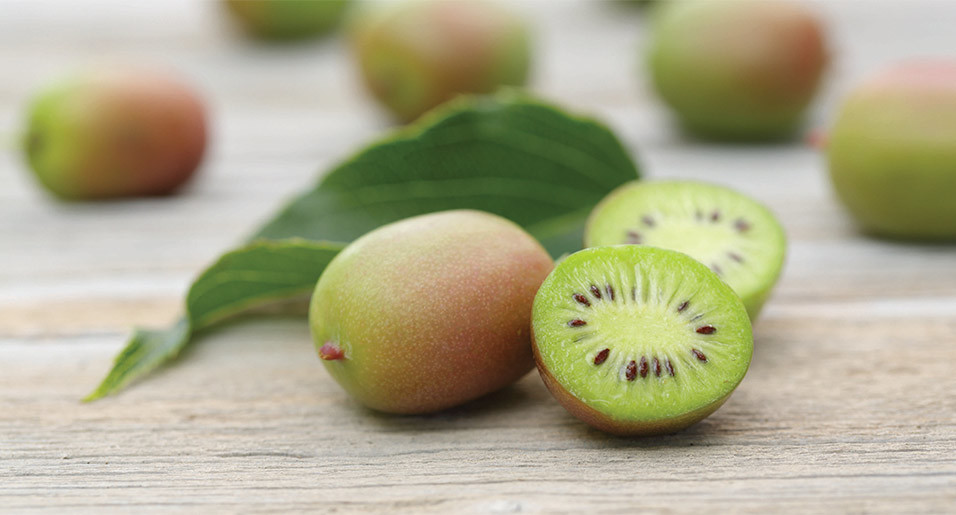 Wholesale Fresh Kiwi